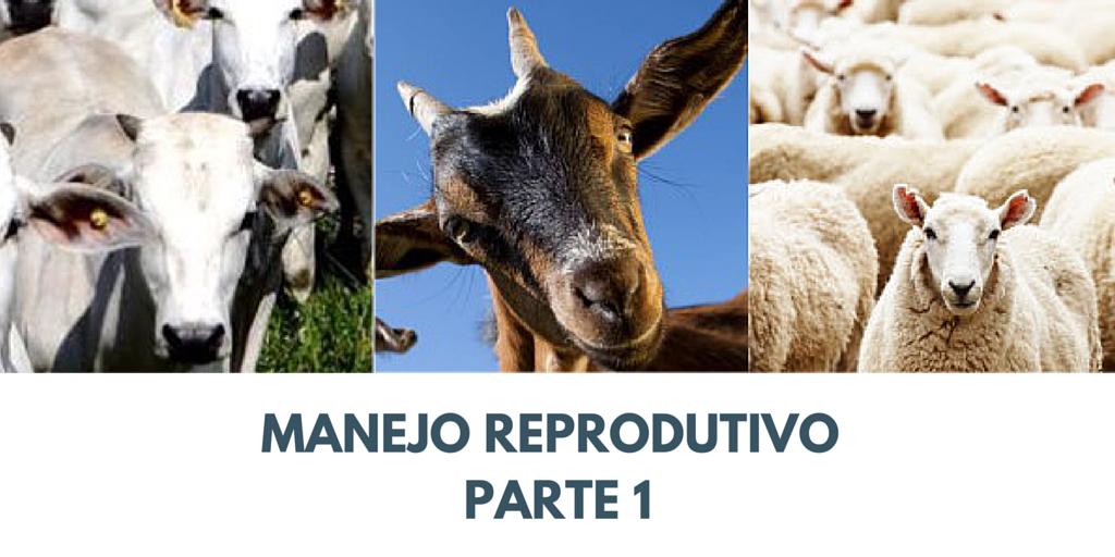 Manejo Reprodutivo – Parte 1