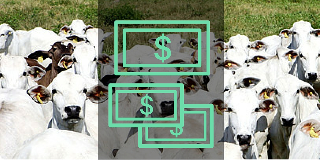 O seu boi dá lucro?