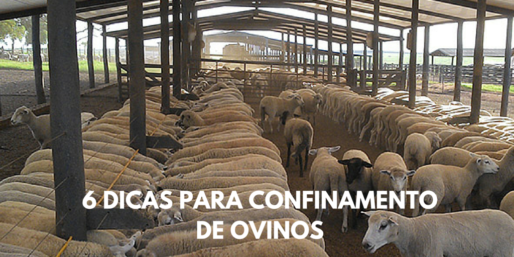 6 Dicas para Confinamento de Ovinos