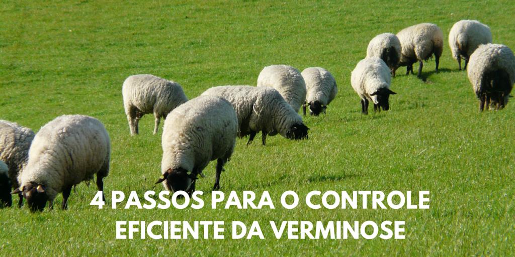 4 passos para o controle eficiente da verminose ovina