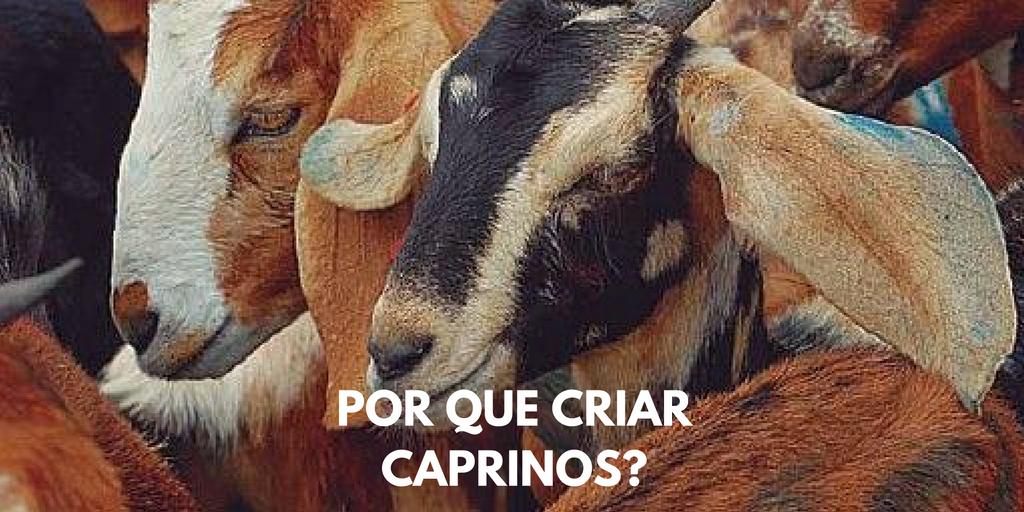 Caprinos – Por que criar?