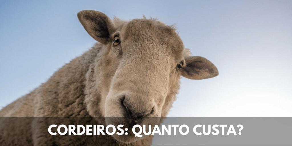 Ovinocultura: Quanto Custa?