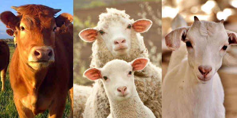 Startups paranaenses encontram nicho na pecuária